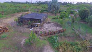 Tropical seeds plants scoins prodution
