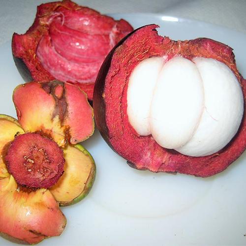 garcinia-mangostana-mangistan-fruit-open