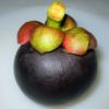 garcinia-mangostana-mangistan-tropical-fruit
