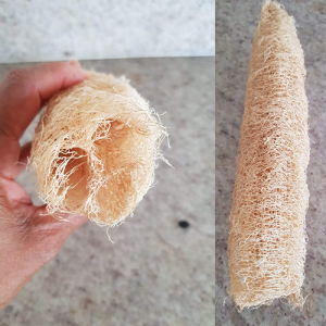 Luffa-aegyptiaca-(Sponge-Gourd)