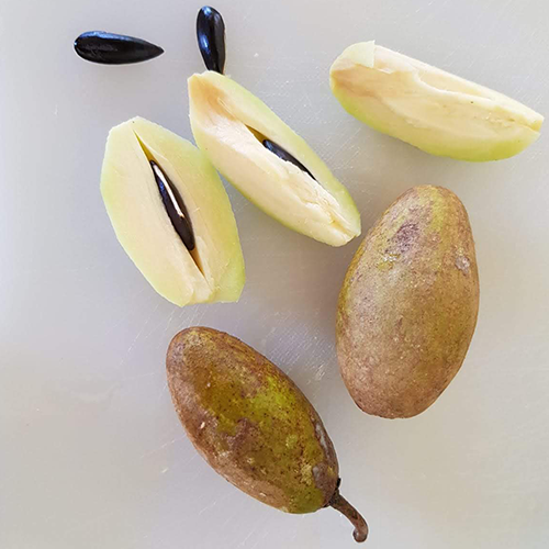Manilkara-Zapota-Sapotille-fruit-and-seeds