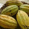Theobroma-cacao-fruits
