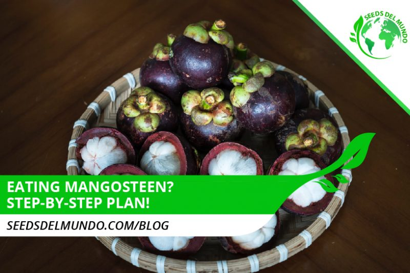 eating-mangosteen