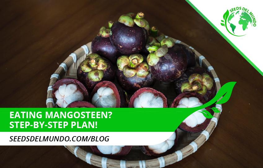 eating-mangosteen