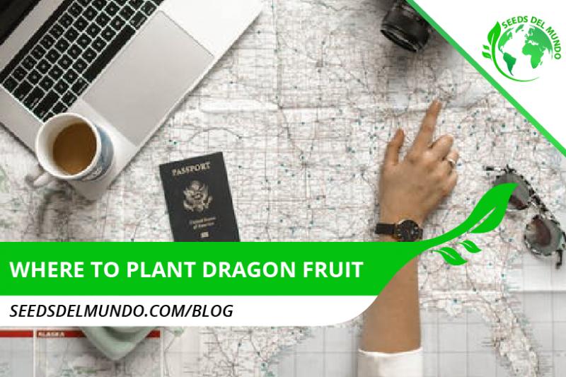 Where to plant dragon fruit