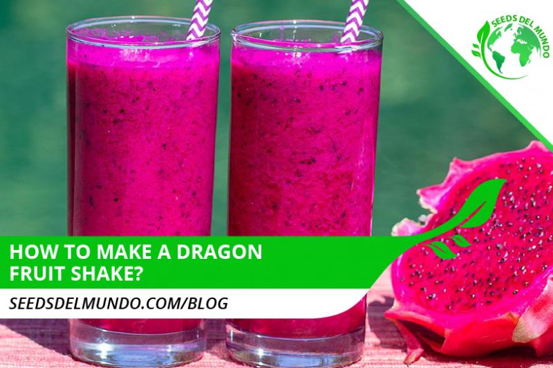 dragon fruit shake
