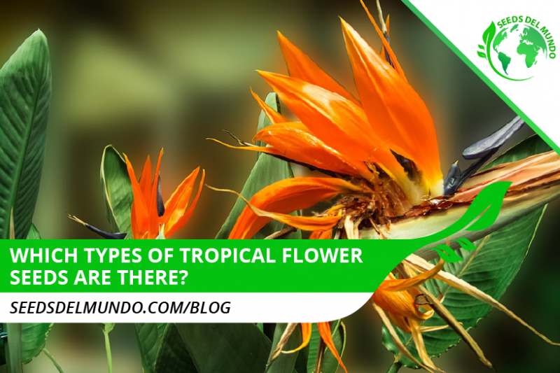 types of tropical seeds
