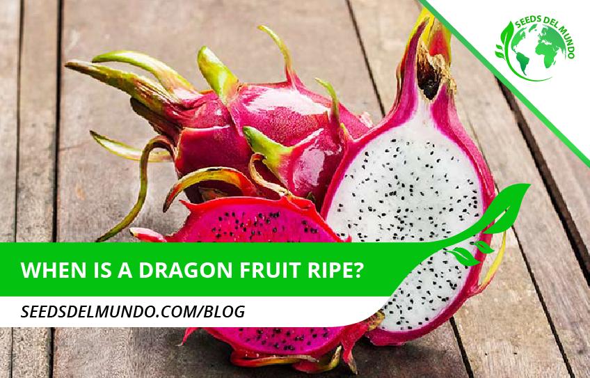 when is a dragon fruit ripe