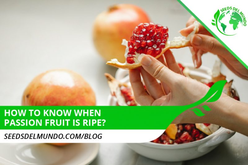 passion-fruit-ripe