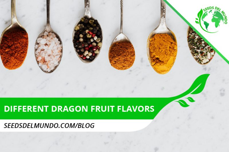different dragon fruit flavors