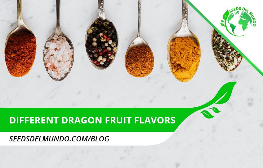 different dragon fruit flavors