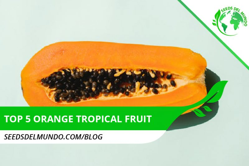 top 5 orange tropical fruit