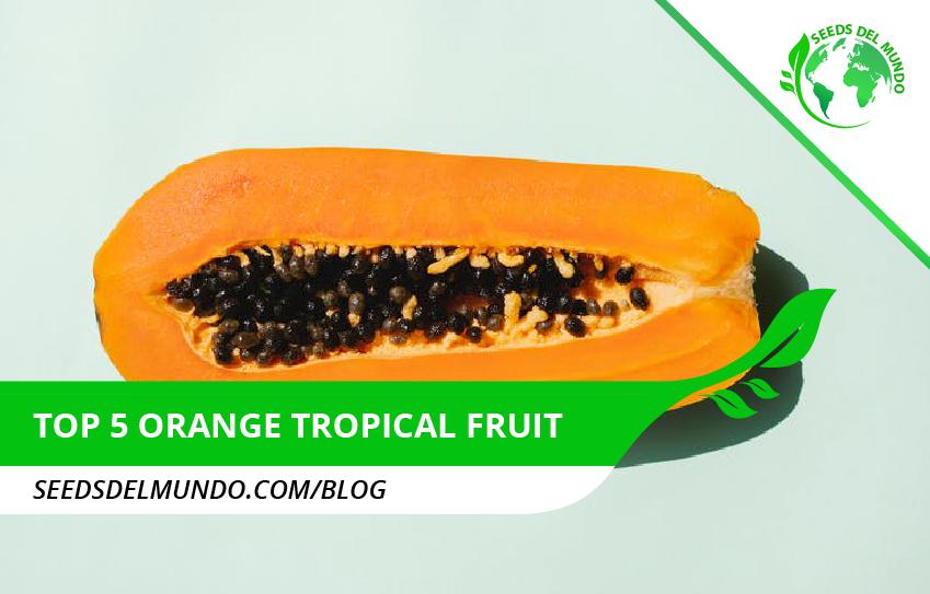 top 5 orange tropical fruit