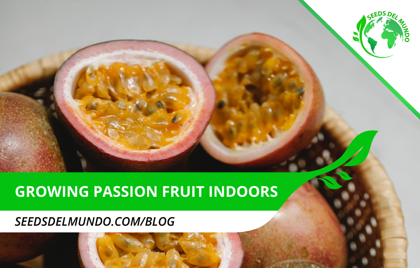 growing-passion-fruit-indoors