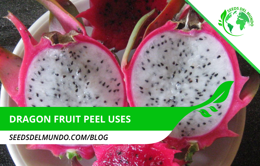 dragon-fruit-peel-uses