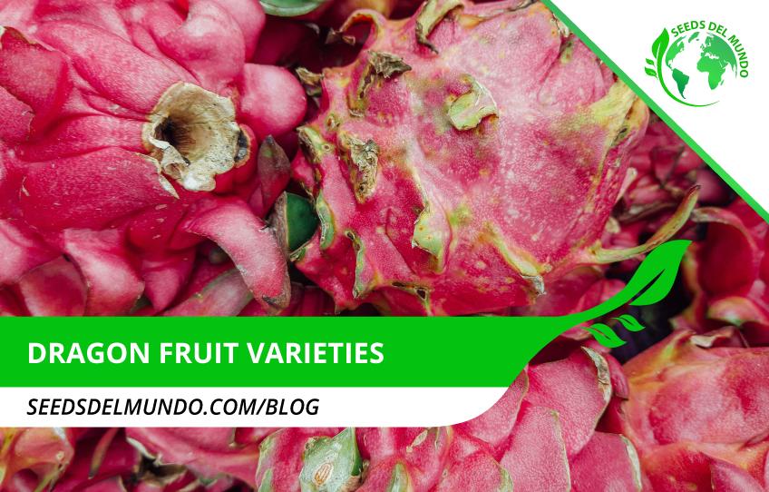 dragon-fruit-varieties