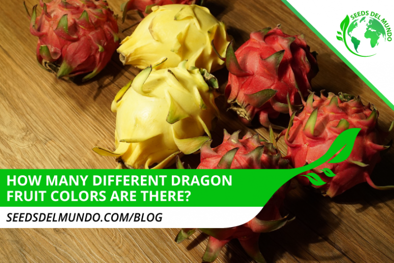How-many-different-dragon-fruit-colors-are-there--