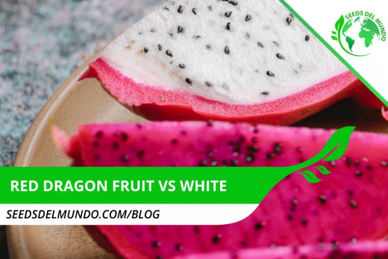 _Red-dragon-fruit-vs-white