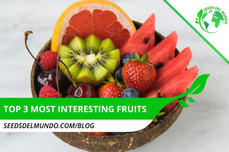 Top-3-most-interesting-fruits-